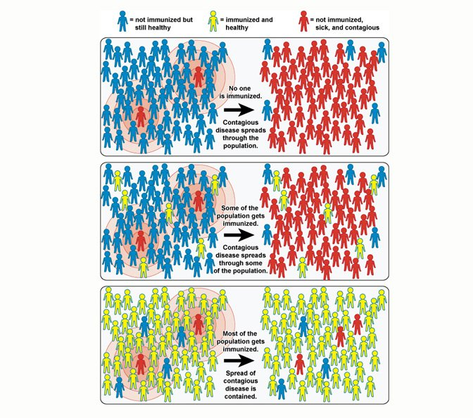 herd immunity is when most of a population is vaccinated against a disease, protecting those who cannot get vaccinated by preventing the disease from easily spreading